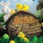 Easter BearGuide 2014